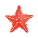 Sea star. Image of red sea star Royalty Free Stock Image
