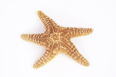 Sea star isolated Stock Photo