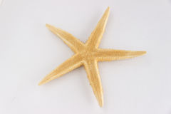 Sea star isolated Royalty Free Stock Images