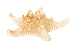 Sea Star Isolated royalty free stock photo