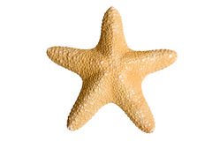 Sea star. Isolated on white background Royalty Free Stock Image