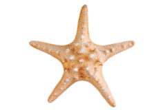 Sea star isolated Stock Images