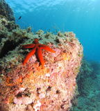 Sea star landscape Royalty Free Stock Image