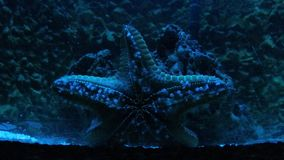 Sea star moving stock video footage