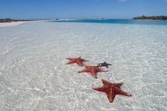 Sea star on the paradise beach - 2. Sea star at the white sand bottom of the fine sea. Cuba Cayo Largo, tropical harbor on island Stock Image