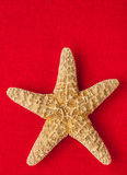 Sea Star Royalty Free Stock Photography