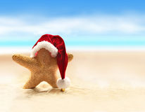 Sea-star in red santa hat walking at sea beach. Stock Photos