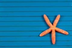 Sea star. Stock Image