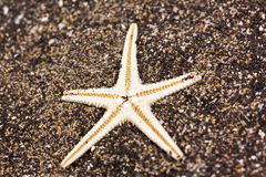 Sea star in the sand Royalty Free Stock Photo
