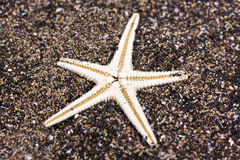 Sea star in the sand Royalty Free Stock Image