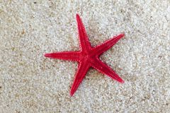 Sea-star on Sand Royalty Free Stock Photography