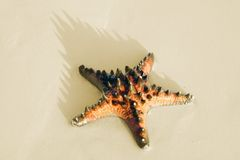 Sea star on the sand. Royalty Free Stock Image