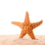 Sea star is on the sand Stock Photos