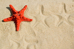 Sea star on the sand Royalty Free Stock Images