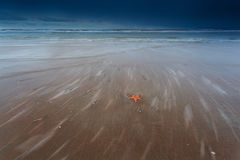 Sea star on sand beach of North sea Royalty Free Stock Images