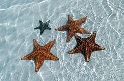 Sea star at the sand bottom of the fine sea Royalty Free Stock Photography