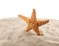Sea star is on the sand Royalty Free Stock Photo