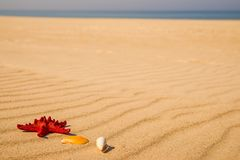 Sea star on a sandy beach Royalty Free Stock Images