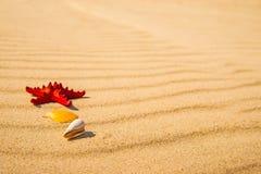 Sea star on a sandy beach Stock Photo