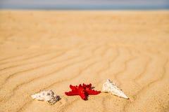 Sea star on a sandy beach Royalty Free Stock Photography
