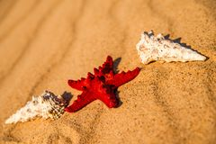 Sea star on a sandy beach stock image