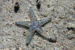 Sea star on sandy bottom Stock Photography