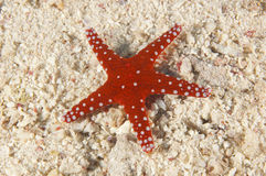 Sea star on a sandy seabed Stock Photography