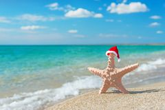 Sea-star in santa hat at sea sandy beach. Holiday concept Royalty Free Stock Photography