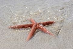 Sea star at the sea. Wave washes a sea star Royalty Free Stock Image