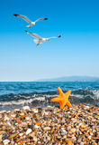 Sea star by the sea and seagulls Royalty Free Stock Image