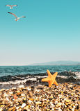 Sea star by the sea and seagulls, text space Stock Photos