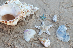 Seastar and Sea Shells laying on top of the sand at the beach stock photography