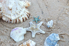 Sea star and Sea Shells on the sand Royalty Free Stock Photography