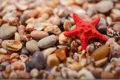 Sea  star on the sea shore Stock Image
