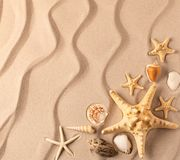 Sea star and shelfish on the rippled sand royalty free stock photography