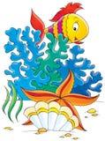 Sea star, shell and coral fish