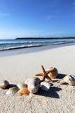 Sea star and shells Royalty Free Stock Image