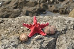 Sea star and shells stock image