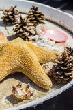 Sea star shells and pine cones in a dish Royalty Free Stock Images