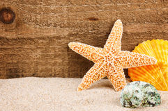 Sea star and shells Royalty Free Stock Photography
