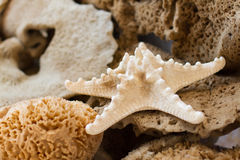 Sea star and sponges Royalty Free Stock Image