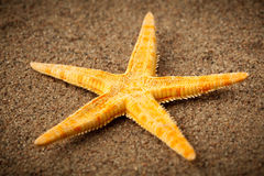 Sea star or starfish. On the beach Royalty Free Stock Images