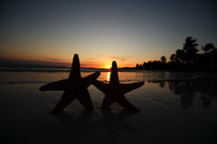 Sea star starfish Silhouette on sunrise beach Stock Photo