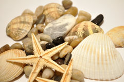 Sea star, stones and sea shells. Sea star, stone and sea shells background Stock Photography