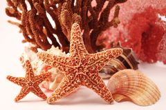 Sea star theme Royalty Free Stock Photo