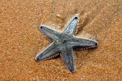 Sea star. Underwater life is varied and beautiful Stock Image