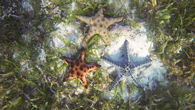 Sea star stock footage