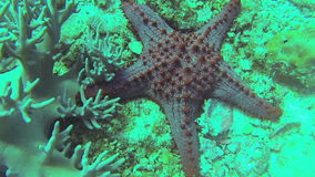 Sea star stock video