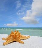 Sea Star on White Sand Beach Stock Photo