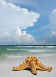 Sea Star on White Sand Beach Royalty Free Stock Images